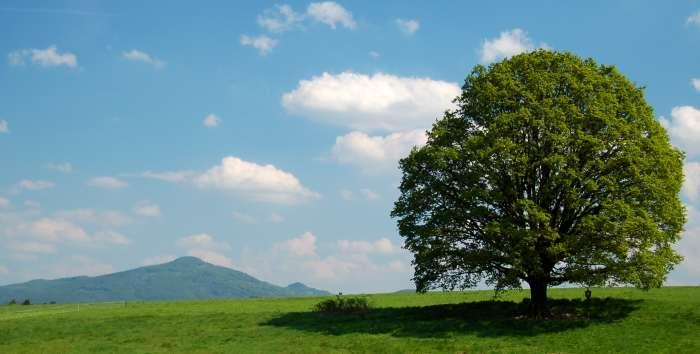 200905230658_pamatny_strom
